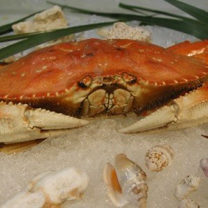 Dungeness Crab Whole